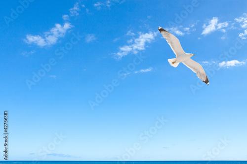 Photo  mouette sur fond de ciel