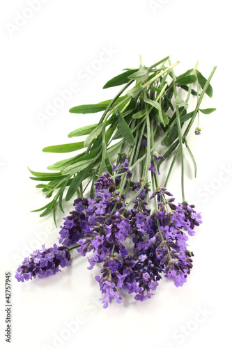 Garden Poster Lavender Lavendel