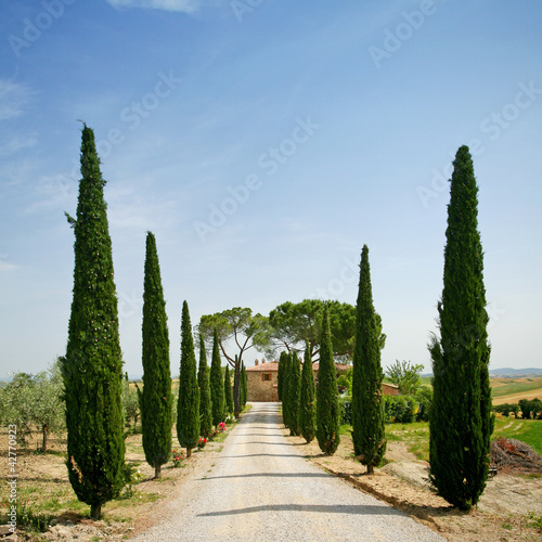 Papiers peints Toscane Cypress alley in Tuscany