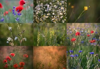 Obraz na PlexiPolska łąka
