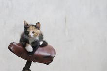 Kitten Cyclist