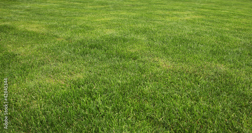 Photo sur Toile Herbe grass