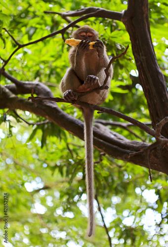 Naklejki dżungla  malpa-na-drzewie-j-banana