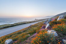 Wild Flowers In Big Sur  And California Highway 1