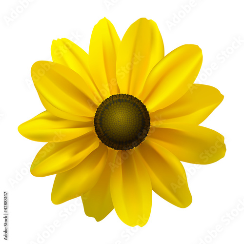 Black Eyed Susan (Rudbeckia Hirta) flower Canvas-taulu