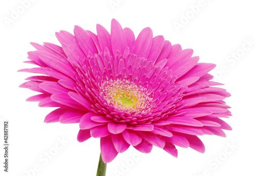 Aluminium Prints Gerbera gerbera flower