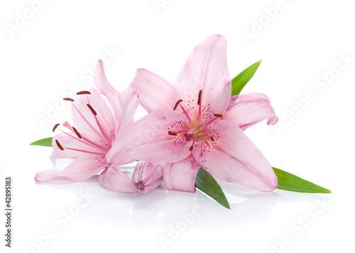 dwie-rozowe-lilii