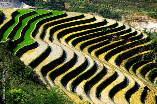 Fotobehang Rijstvelden rizière en escalier