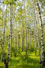 Panel Szklany Podświetlane Skandynawski Birch wood