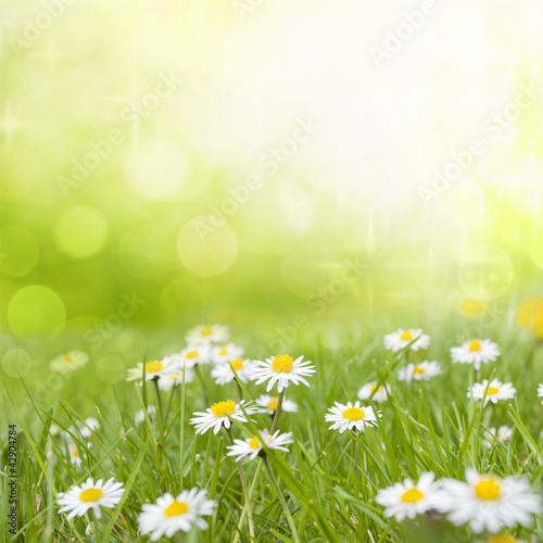 Foto op Canvas Madeliefjes Daisy flowers on meadow floral abstract background