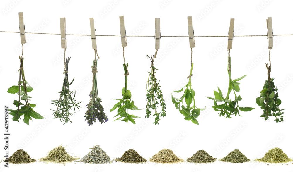 Fototapety, obrazy: Fresh herbs hanging on a rope.