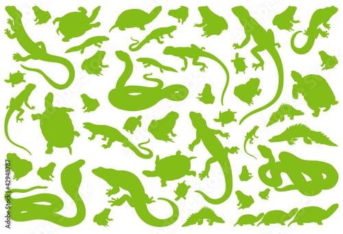 Photo Amphibian reptile environmental vector