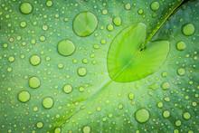 Heart Shape Water Drop