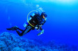 canvas print picture - Diving in the Red Sea