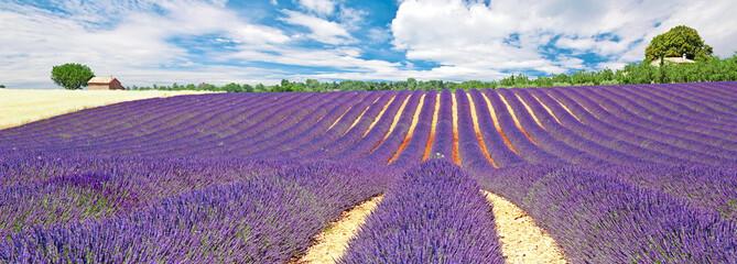Fototapeta na wymiar Provence - Plateau de Valensole
