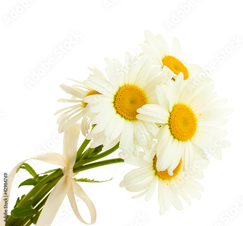In de dag Bloemen beautiful daisies flowers isolated on white