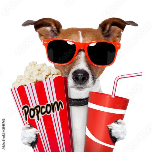 Obraz Pies oglądający film - fototapety do salonu