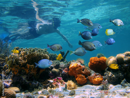 Man underwater snorkeling on a colorful coral reef with school of tropical fish, Caribbean sea