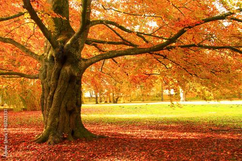 Fotorollo basic - Herbstbaum (von Martina Grimm)