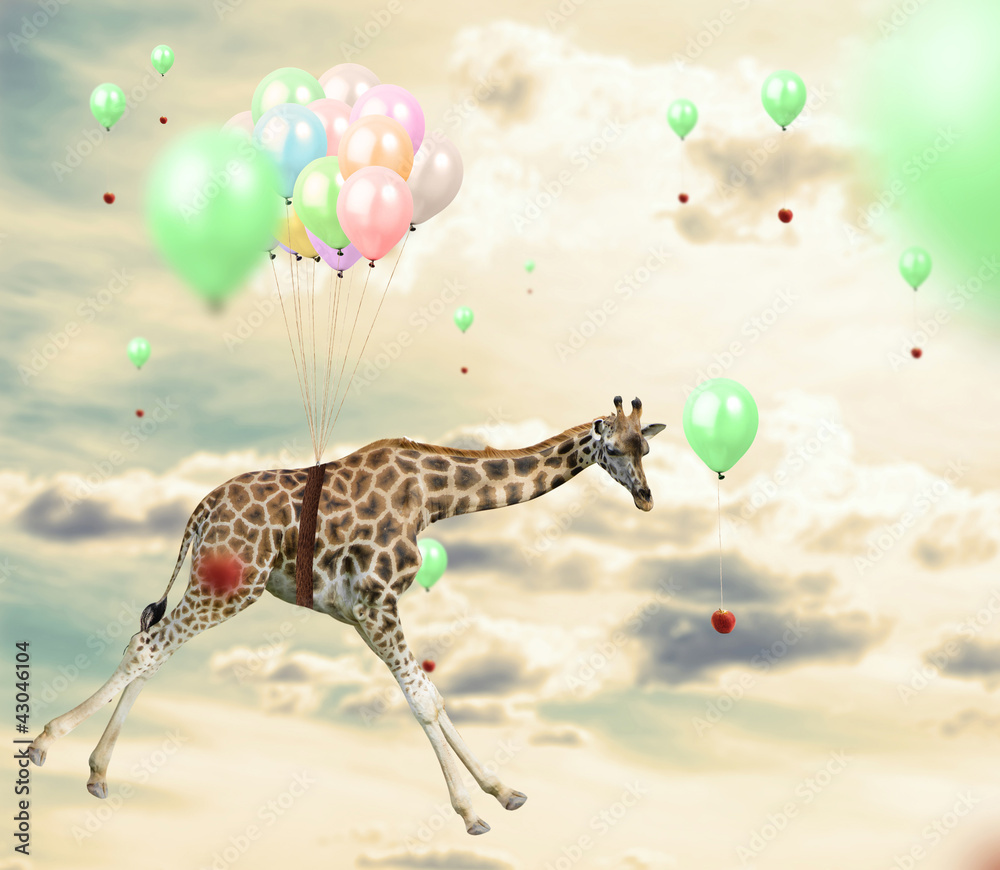 Fototapeta Ingenious giraffe reaching an apple flying using balloons
