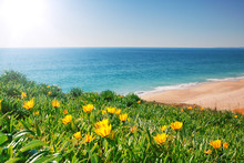 View Seascape With Yellow Flowers And Grass. Portugal, Algarve.