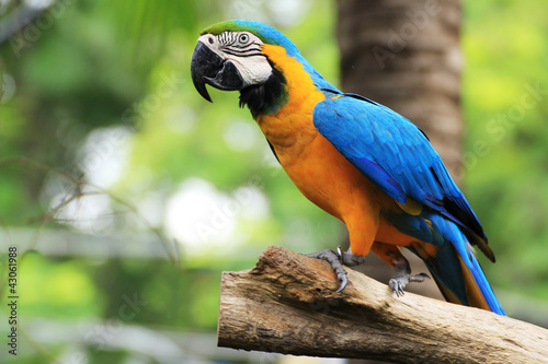Naklejki papugi  kolorowa-ara