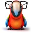 canvas print picture Fun parrot