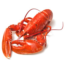 Cooked Common Lobster.