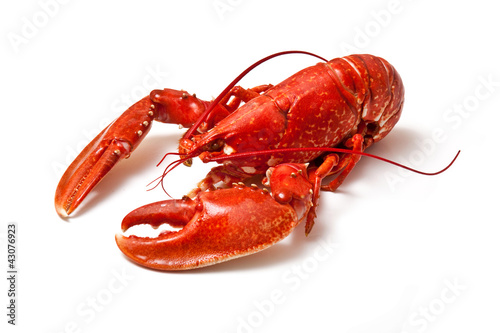 Fototapeta Cooked Lobster.