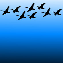 Migratory Birds On Sky