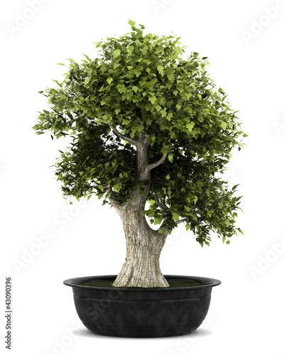 Spoed Fotobehang Bonsai bonsai plant in pot isolated on white background