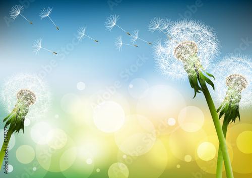 Pusteblumen im Wind