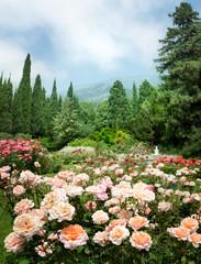 FototapetaRose Garden