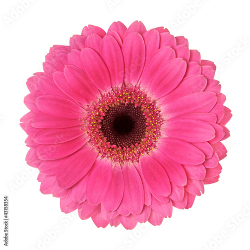 Crédence de cuisine en verre imprimé Gerbera flower on a white background