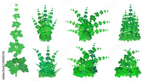 Stampa su Tela Set of bushes