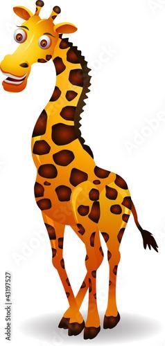 Poster de jardin Zoo cute giraffe cartoon isolated on white background