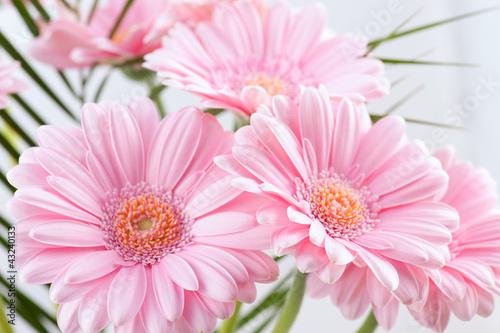 Fototapeta Chrysanthemen obraz na płótnie