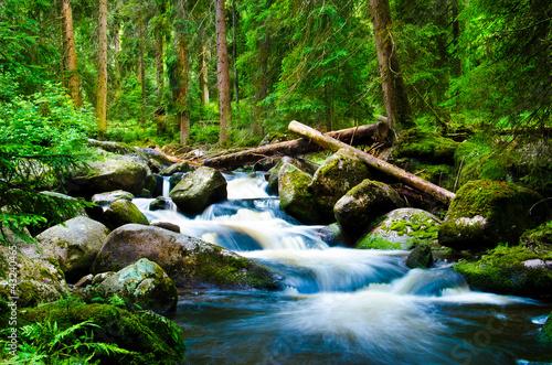 Deep wood - 43240465