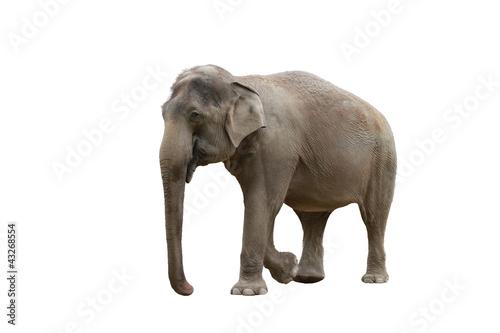 Fotobehang Olifant elefant in farbe