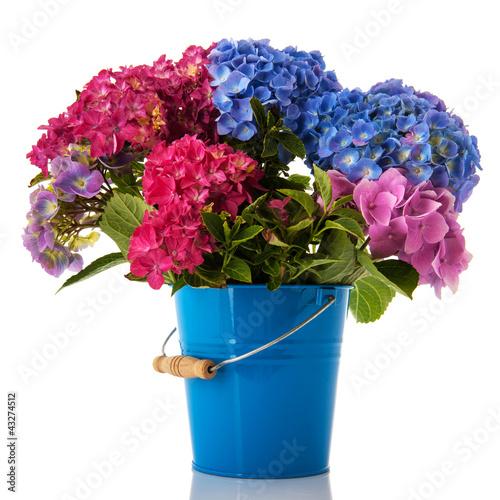 Deurstickers Hydrangea Colorful Hydrangea