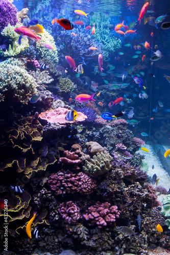 Photo  Saltwater Aquarium with Tropical Fish