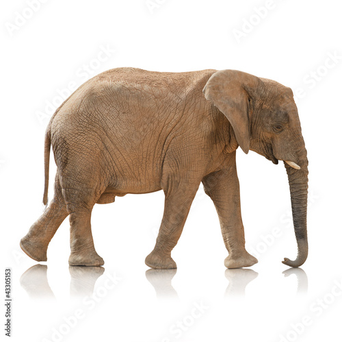 Fotobehang Olifant Portrait Of An Elephant Bull