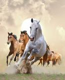 horses in sunset - 43305926