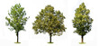 Trees colection
