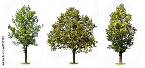 Fototapeta Trees colection obraz