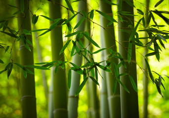 Naklejka Japoński Bamboo forest background