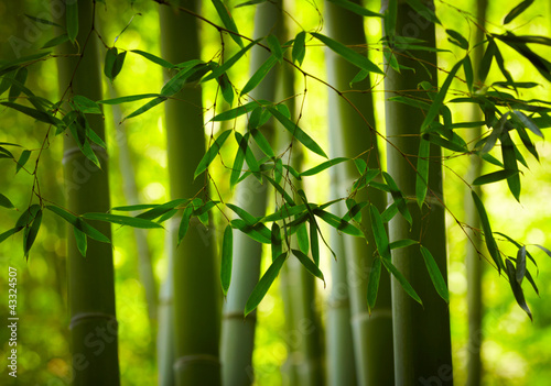 Deurstickers Bamboe Bamboo forest background