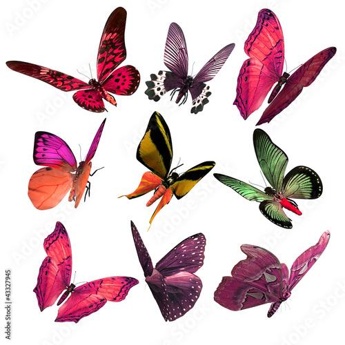 Fotografie, Obraz  Beautiful 3D Butterflies