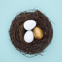 Eggs And One Golden Egg In Nest