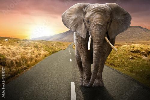 Foto op Aluminium Olifant Elephant walking on the road at sunset